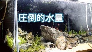 getlinkyoutube.com-赤いエリアを作る!圧倒的水量の外部フィルター稼働 【水槽立ち上げ】