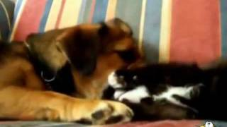 getlinkyoutube.com-10 minutos de gatos lindos jugando con perros