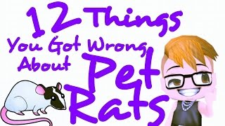 12 Things You Got WRONG About PET RATS!!