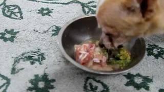 getlinkyoutube.com-Lauryn (chihuahua) eating Organic RAW meats/bones/organs/healthy powder/ Truganic Superfood
