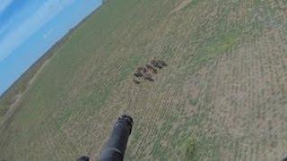 getlinkyoutube.com-Helicopter Hog Hunting - The Management Advantage #55