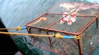 getlinkyoutube.com-Crab Fishing Our Way