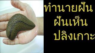 getlinkyoutube.com-ฝันเห็นปลิงเกาะ (พร้อมเลขเด็ด)