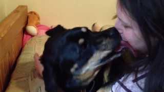 getlinkyoutube.com-Rottie kisses