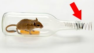 getlinkyoutube.com-How to make a mouse trap with a plastic bottle 😱 Tutorial