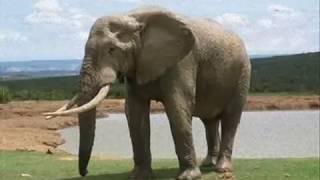 getlinkyoutube.com-เพลงช้าง