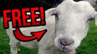getlinkyoutube.com-GET A GOAT FOR FREE! (BroKen #7)