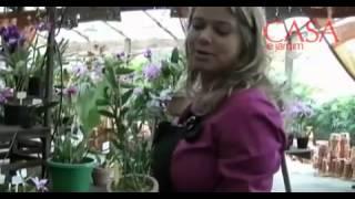 Orquídeas o ano todo