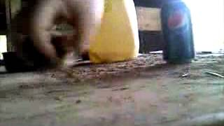 getlinkyoutube.com-Rooster Conditioning