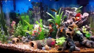 getlinkyoutube.com-Best Fish Tank Aquarium I Ever Created - Beautiful