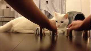 Alba-neagra cu pisica