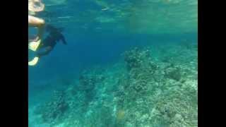 getlinkyoutube.com-Hot Pink Bikini Girl Snorkeling