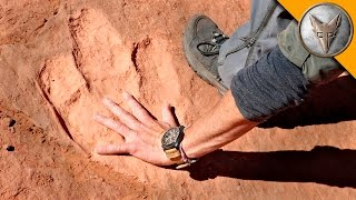 getlinkyoutube.com-Hunting for Dinosaur Tracks!