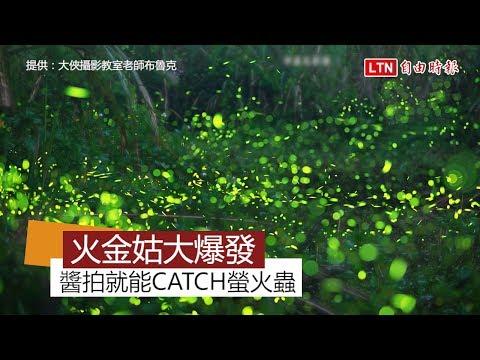 拍攝技巧大公開!台北市公園就能看到螢火蟲