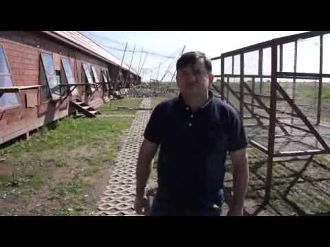 Wspólny Gołębnik Koziegłówki - ostatnie gołębie - 31.05.2014r.