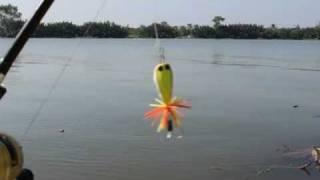 getlinkyoutube.com-กบกระโดดเมืองสมุทร ขนาด 4.5ซ 5ซ