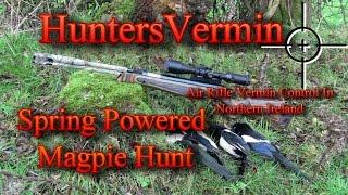 getlinkyoutube.com-Air Rifle Hunting, Spring Powered Magpie Hunt