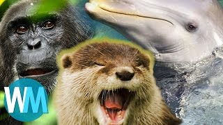 Top 10 Things BBC's Planet Earth Taught Us