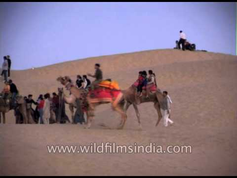 View the fragile and beautiful ecosystem of Thar desert riding on Camels back