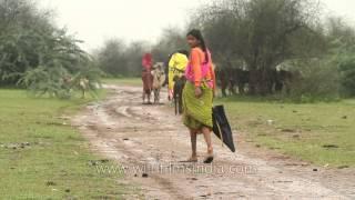 getlinkyoutube.com-Tall Rajasthani girl walks in monsoon season, umbrella in hand, goat in tow
