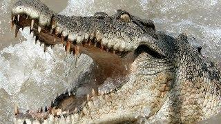 getlinkyoutube.com-Crocodile Carnage - Horrific Attacks