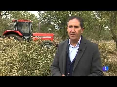 REBI SLU: La Red de Calor de Soria, en los informativos de TVE