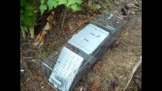 getlinkyoutube.com-Armadillo Trap
