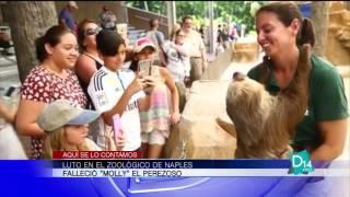 Muere osa perezosa de el zoológico de Naples