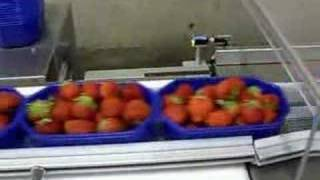 getlinkyoutube.com-packaging strawberries