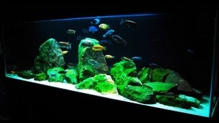 getlinkyoutube.com-How to Set up an African Cichlid Tank - Step by Step Guide