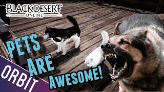getlinkyoutube.com-Black Desert Online | Pets are NOT useless! This game keeps getting better