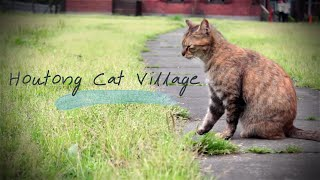 getlinkyoutube.com-The Traveller Hotong Taiwan 3 หมู่บ้านแมวแห่งไต้หวัน