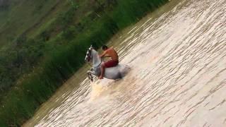 getlinkyoutube.com-Tombo de cavalo