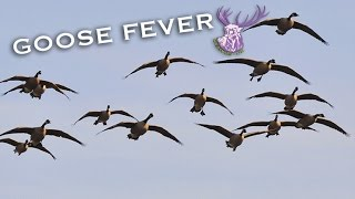 getlinkyoutube.com-GOOSE FEVER!