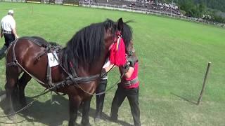 getlinkyoutube.com-Concurs tracţiune cai - Draft Horse Pull Contest (Gura Humorului, Bucovina, Romania, 2015)