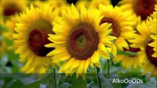 getlinkyoutube.com-قصيدة رائعة جدا بك أستجير ومن يجير سواك بجودة رائعة
