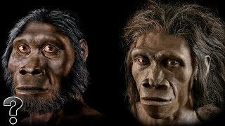 getlinkyoutube.com-Did Humans Evolve From Apes?