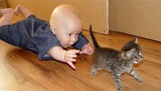 getlinkyoutube.com-Babies annoying cats – Funny baby & cat compilation
