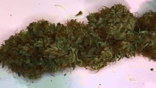 getlinkyoutube.com-Alien Rift Monocrop Final Harvest Results Video