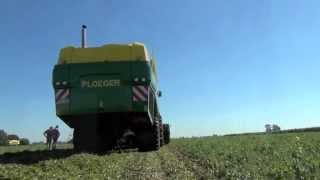 Горохоуборочный комбайн Ploeger EPD 540