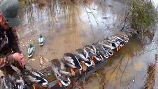 getlinkyoutube.com-Duck Hunt Virginia North Carolina