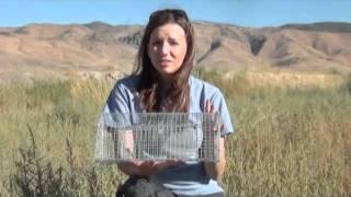 Bal-Chatri Trap for Falconry