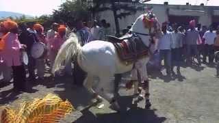 getlinkyoutube.com-Horse Dance at Marathi wedding.