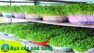 getlinkyoutube.com-Kỹ thuật xây dựng mô hình trồng rau thủy canh hiệu quả kinh tế cao