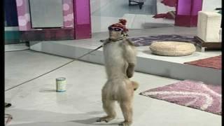 getlinkyoutube.com-Street Entertainer - Monkey / Goat | Life Skills TV