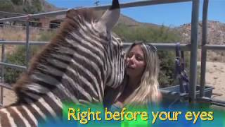 getlinkyoutube.com-Meet Candi Cane Cooper / Animal Communicator / Horse Whisperer / Dog Whisperer