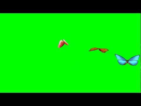 Animated Flying Butterfly (Green Screen) HD