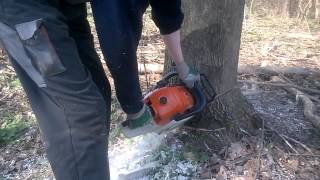 getlinkyoutube.com-Stihl ms 661