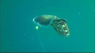 getlinkyoutube.com-Ροφος το αγαπημενο μου ψαρι ,