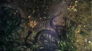getlinkyoutube.com-พญานาค ศาลเจ้าแม่งูจงอางและลูก By โชคมาครอง ทองล้นฟ้า